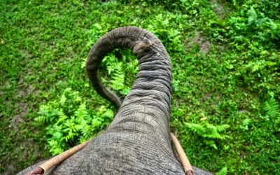 Idea to Implementation: Reimbursement, the Elephant in the Room