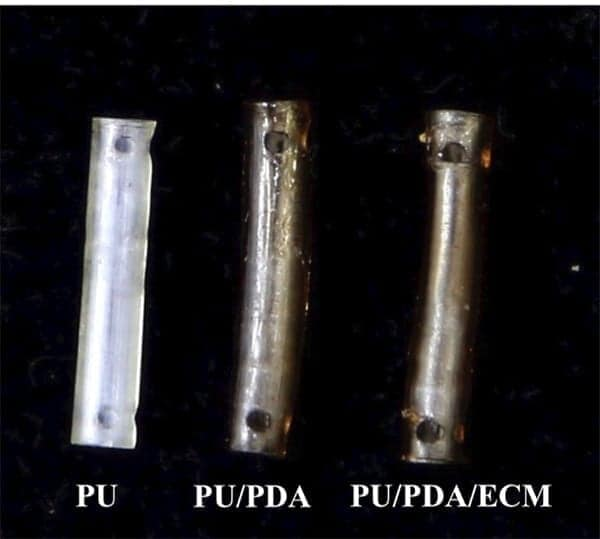 Figure 1. (b) The top-view photograph of 3D-printed PU-based conduits.