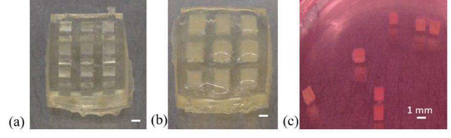 Figure 2. The process of S manufacturing cell-containing blocks and a method of assembling procedures: (a) Degradable mold; (b) cell block adhesion; (c) cell block collection.